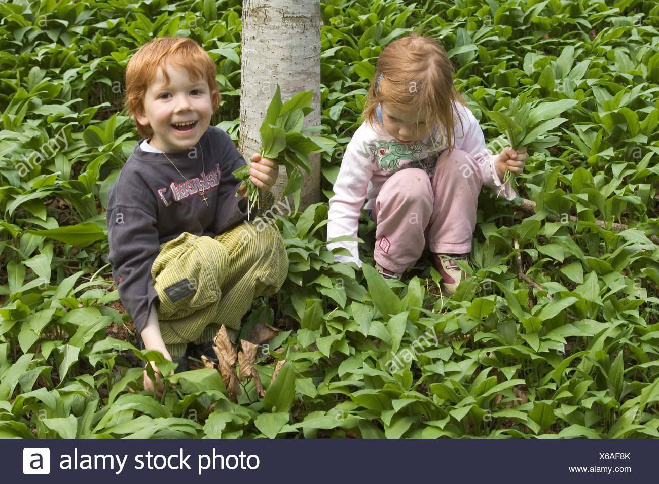MR Mädchen und Junge pflücken im Wald Bärlauch Baerlauch Allium ursinum Bärenlauch MR girl and boy are picking ramson allium Stock Photo