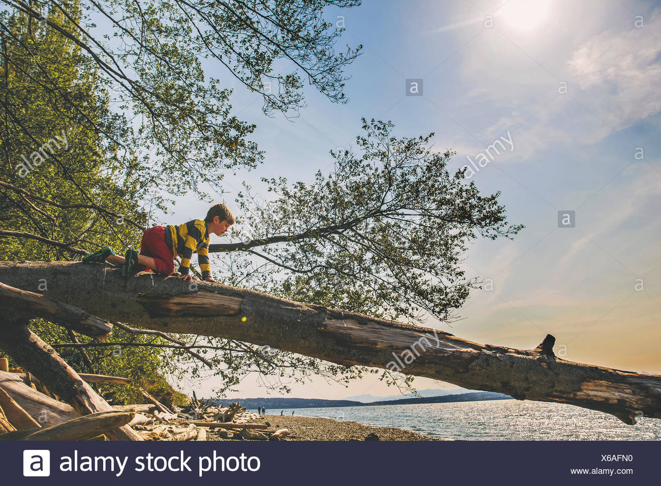 Boy climbing on a tree trunk by a lake - Stock Image