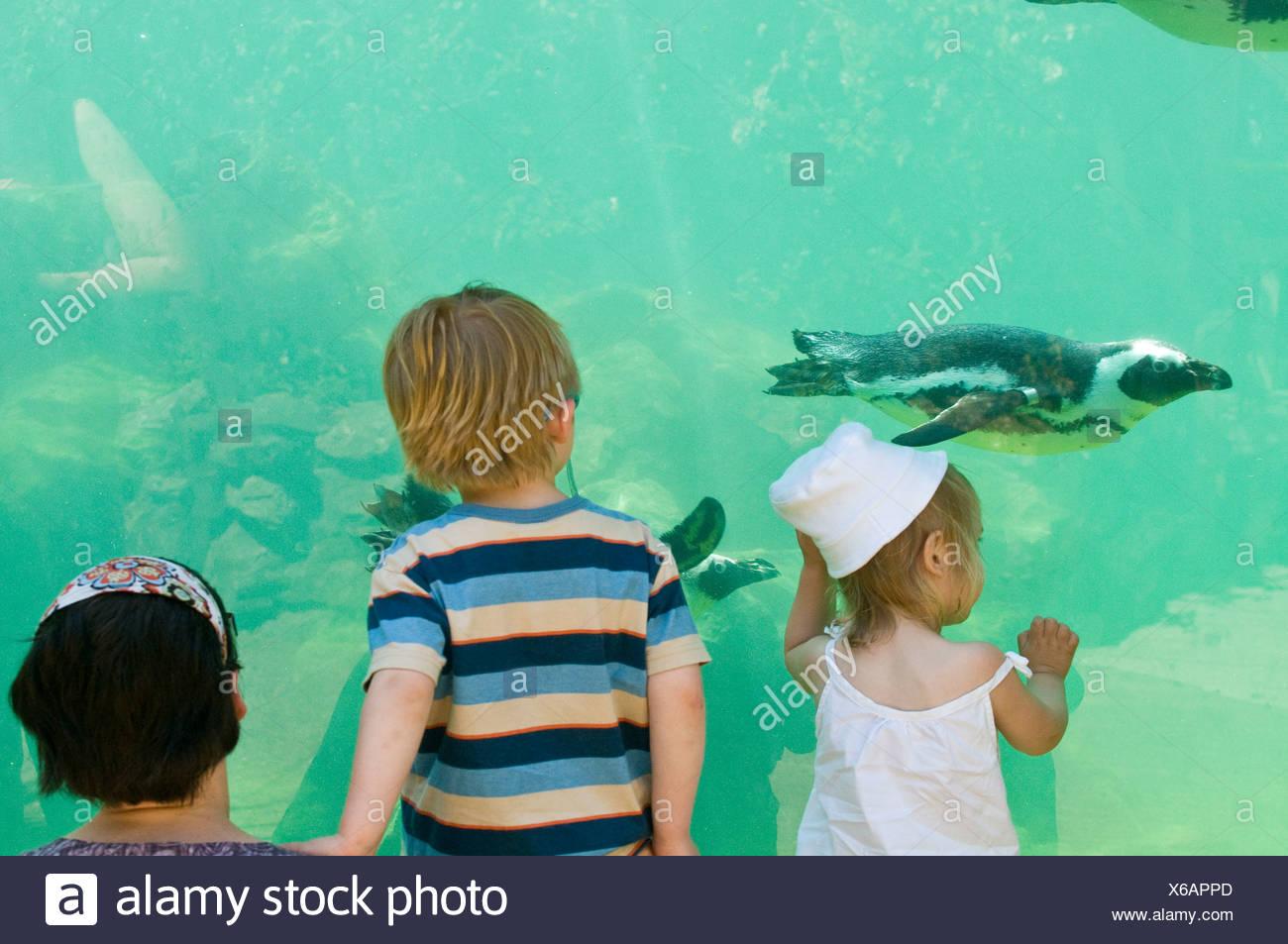 Toddlers watching Magellanic Penguins swimming underwater at Zoo - Stock Image