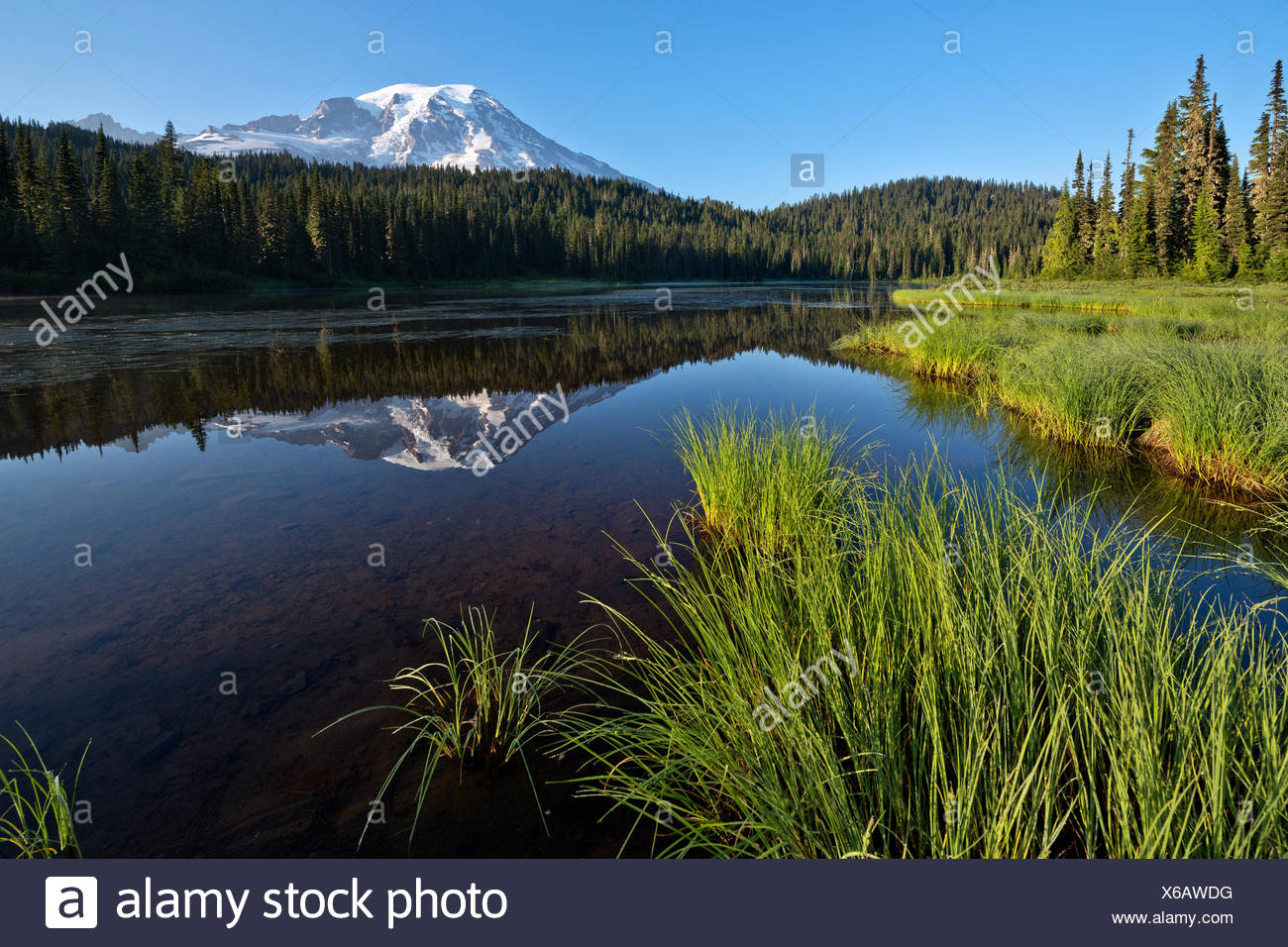 Stratovolcano in the Cascade Mountains - Mount Rainier NP USA above 4392 m and potentially very dangerous for the whole region of Seattle (melting glaciers causing massive lahars) - Stock Image