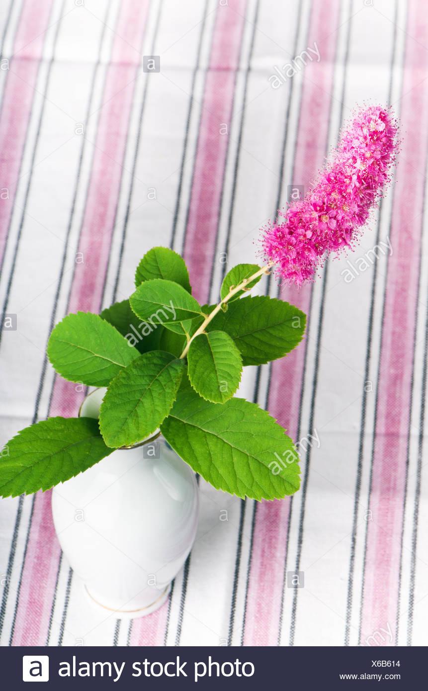 Beautiful spring single flower in vase stock photos beautiful beautiful pink flower in a vase stock image izmirmasajfo