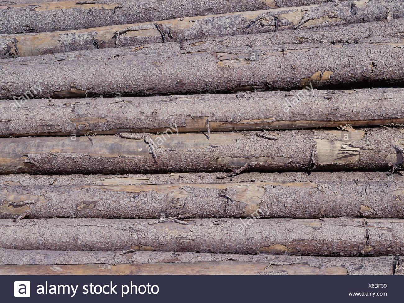 wood storage coniferous wood pile large amount cutting part tree & wood storage coniferous wood pile large amount cutting part tree ...