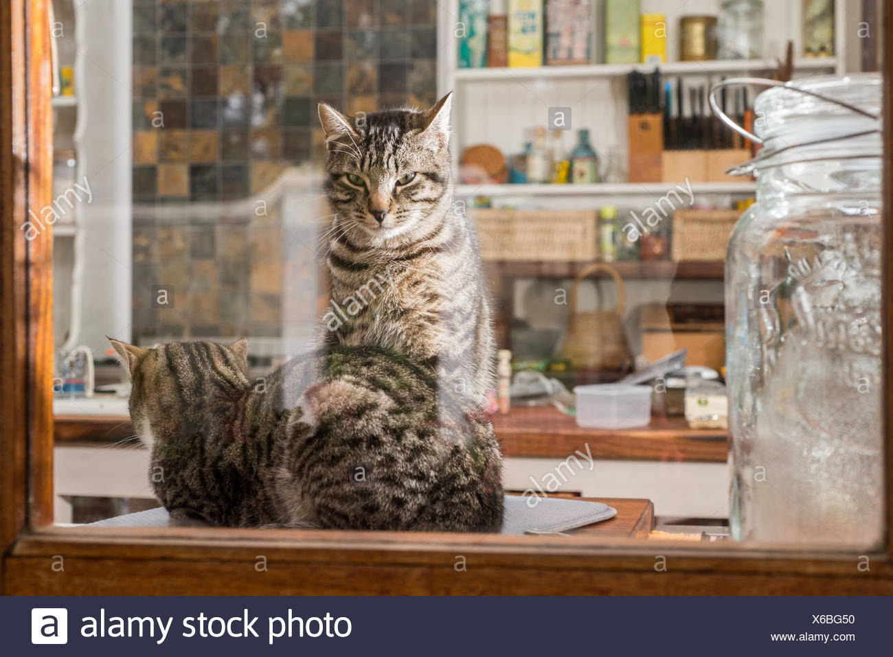 Two Cats In The Kitchen Stock Photo 279307980 Alamy
