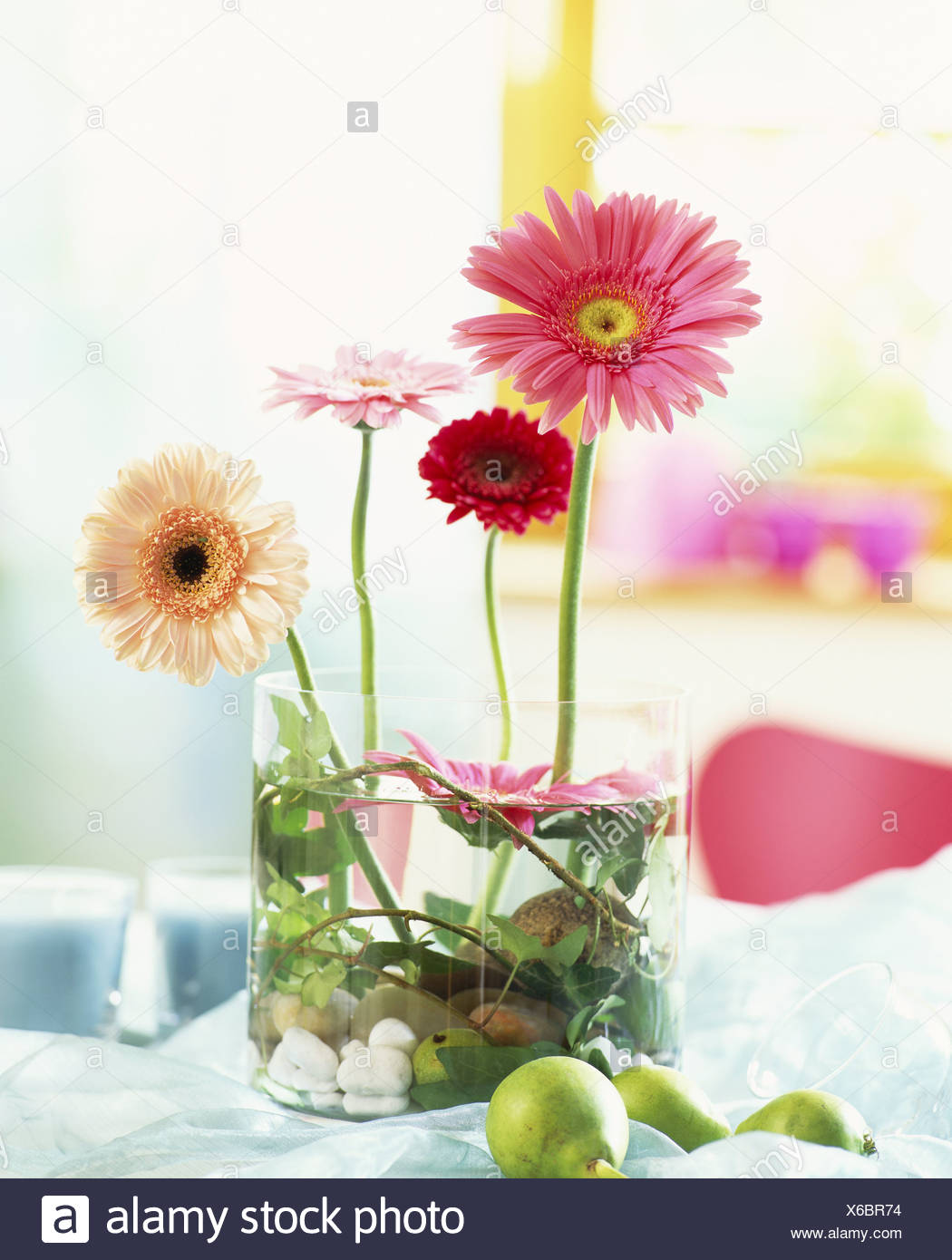 Gerberas, upright and floating in a glass container - Stock Image
