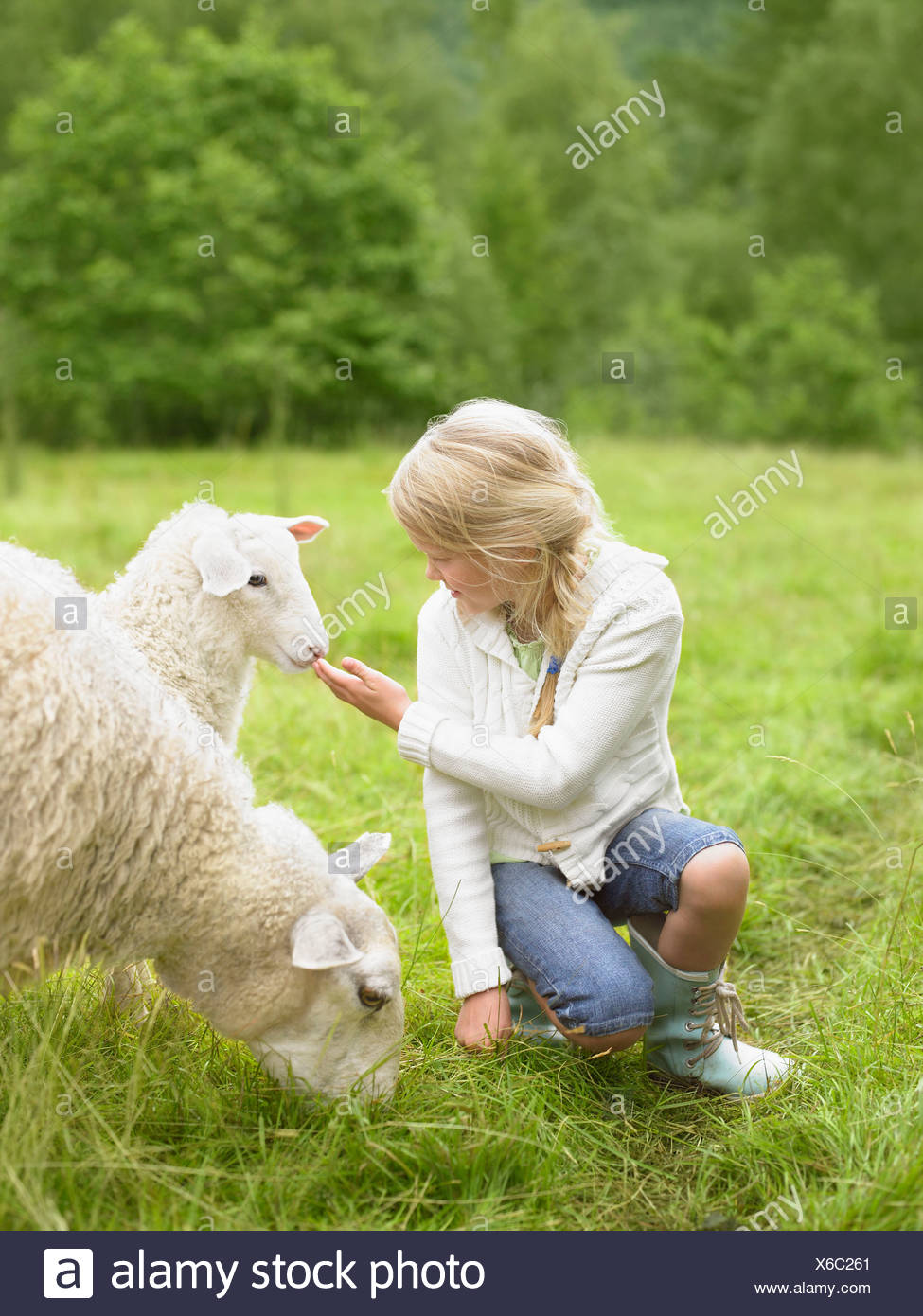 Young girl smiling and crouching by lamb in a field. - Stock Image
