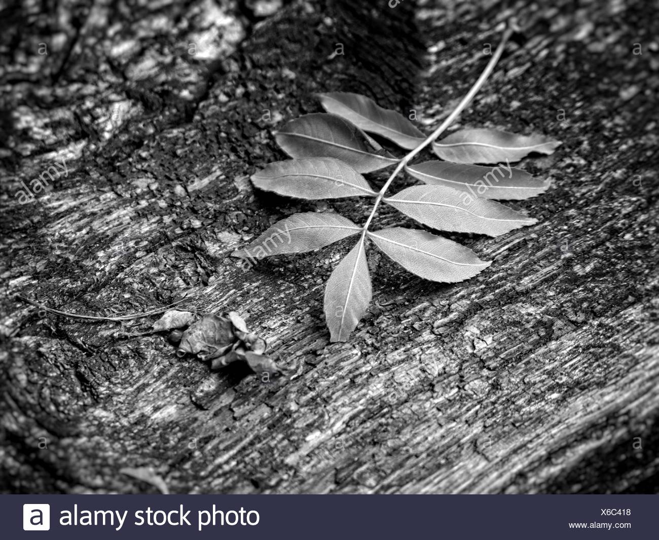 Close-Up Of Leaves On Rocky Surface - Stock Image
