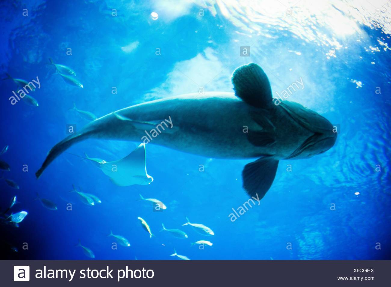 Underwater View Of Fish Stock Photo