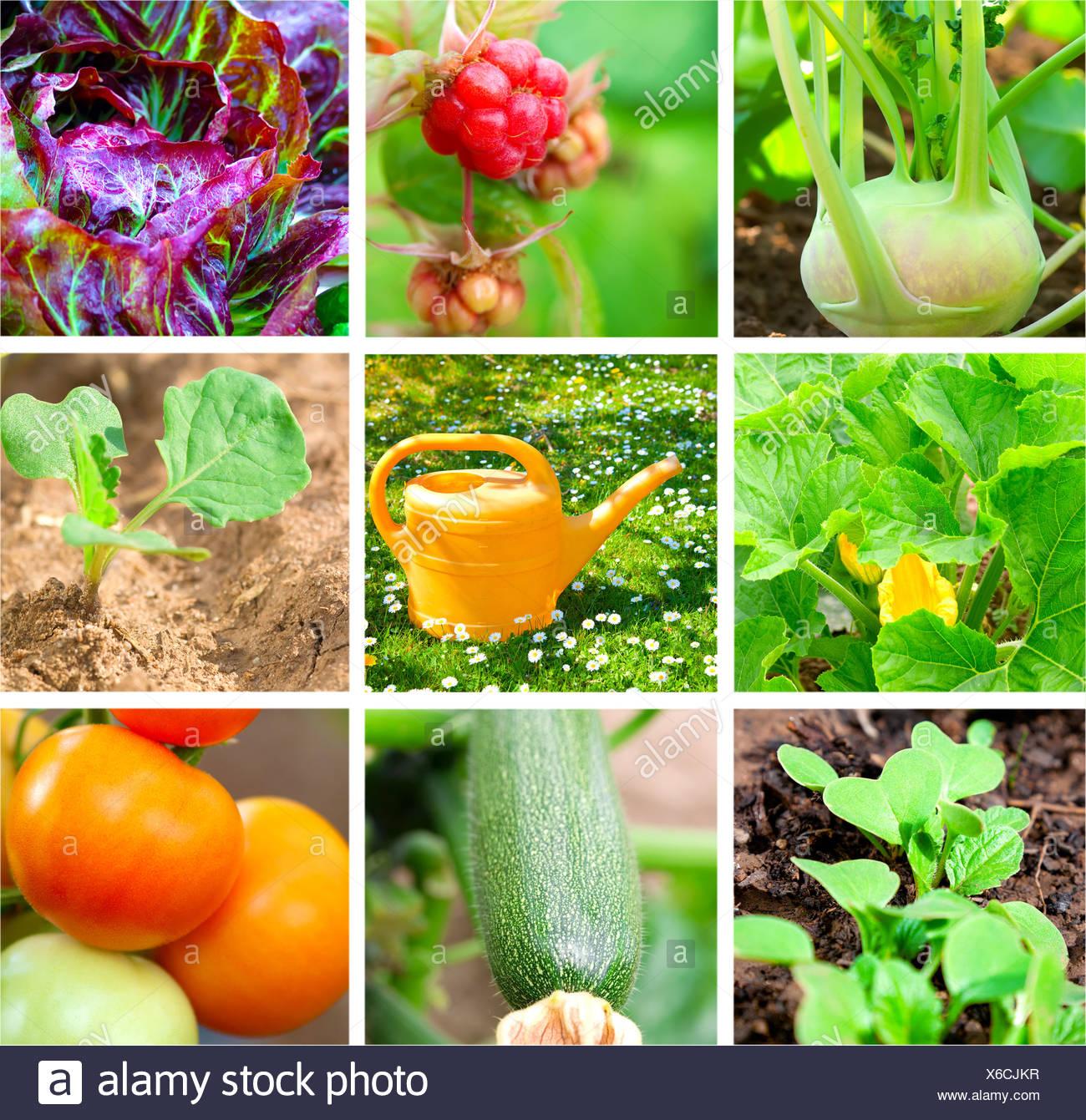 set of vegetable garden - Stock Image