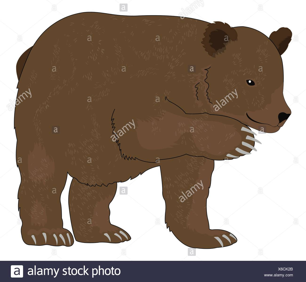 Bear or Ursus arctos, Brown, vector illustration Stock Photo