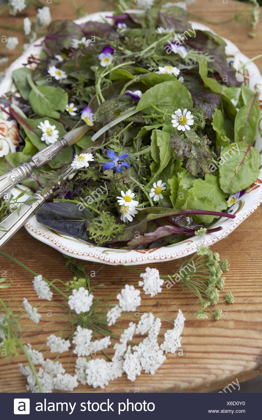 Salad bowl, mixed salad - Stock Image