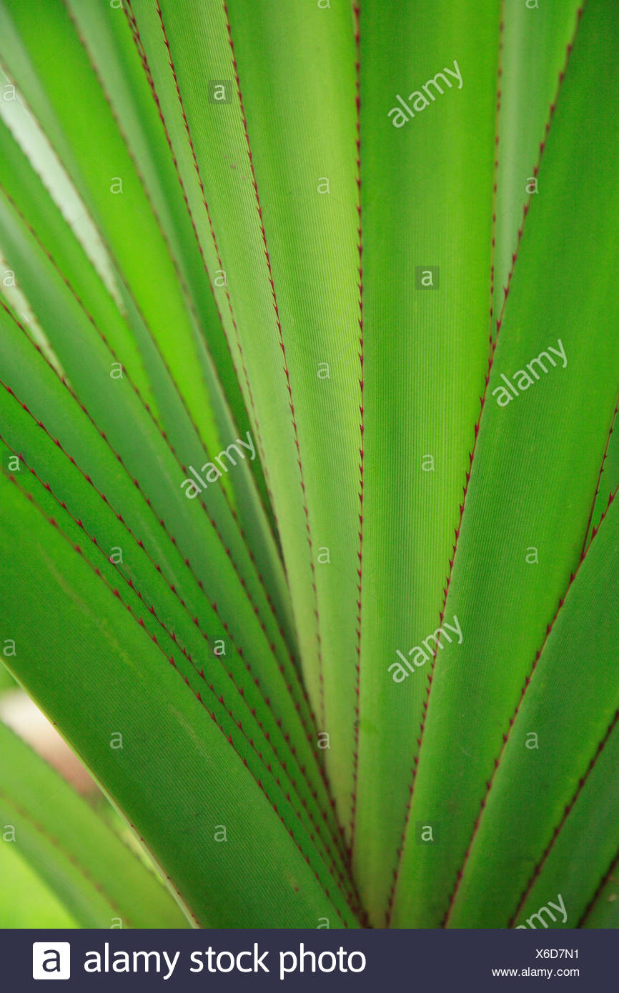 Plant, leaves, diversified, close up, jagged, serrated, medium close-up, sample, structure, green, pale green, - Stock Image