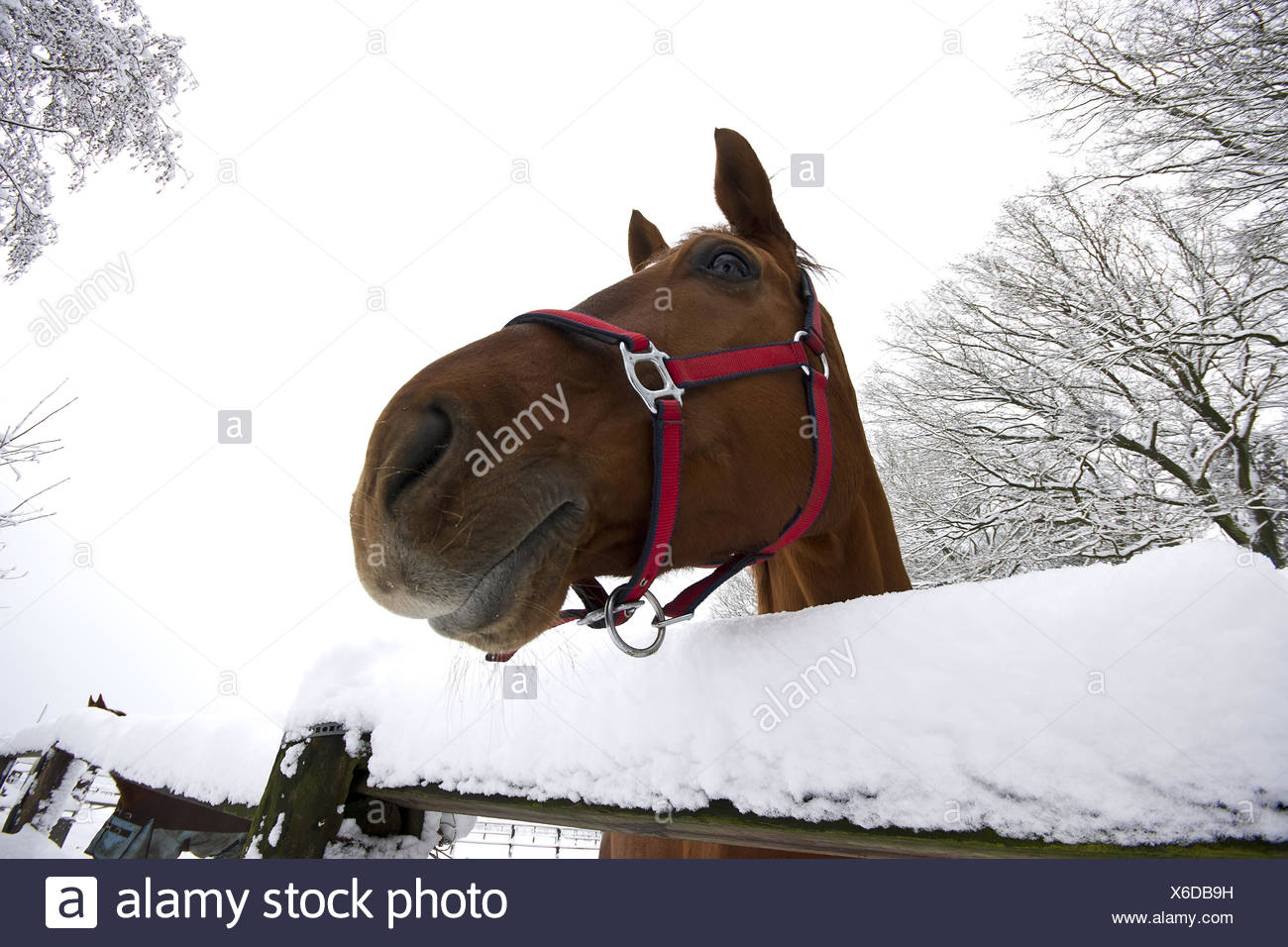 observant looking horse - Stock Image