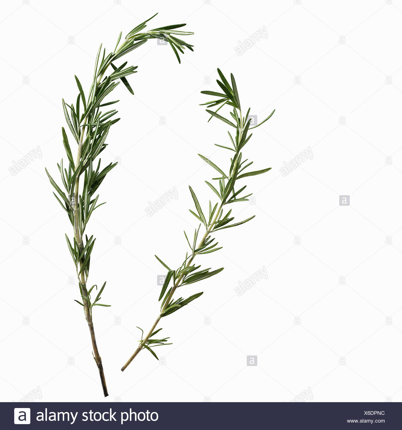 Close up of sprigs of herbs - Stock Image