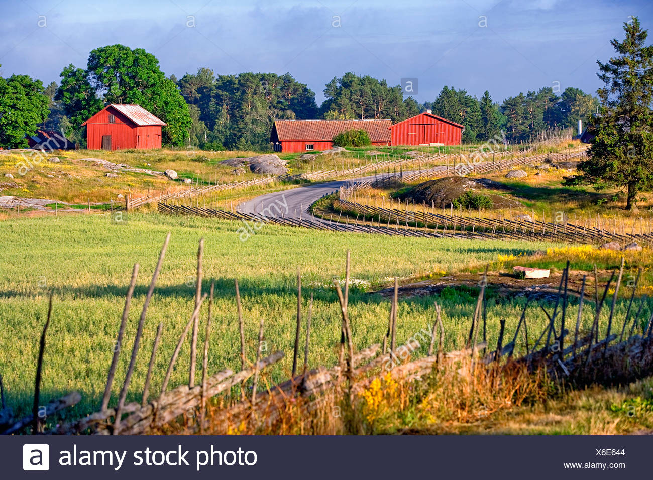 Sweden Uppland Arrangement Background Barn Barns Country Countryside Ecosystem Europe Exterior Fence Forest Green Landscape