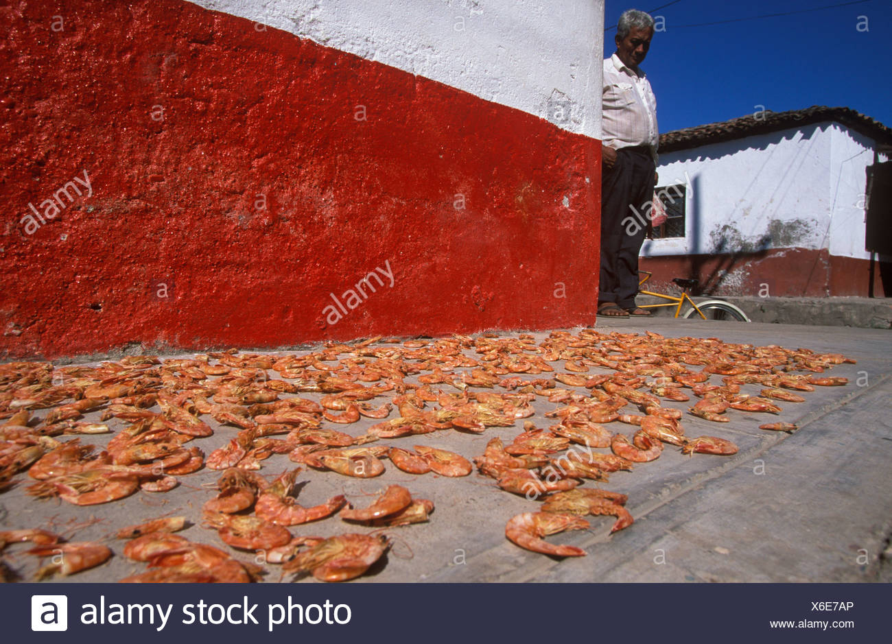 Camarones, crabs laid out to dry, Mexcaltitan Island, Nayarit, Mexico Stock Photo