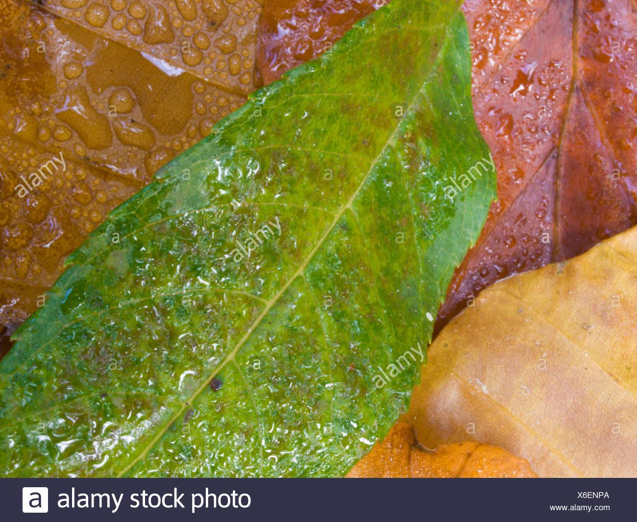 Leaf, leaves, Bruggwald, autumn, seasons, tree, trees, nature ...