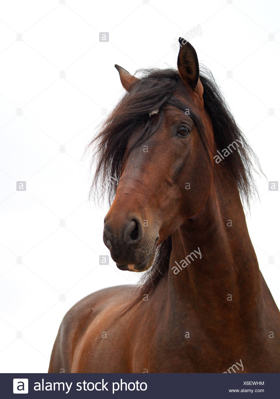 andalusian - Stock Image