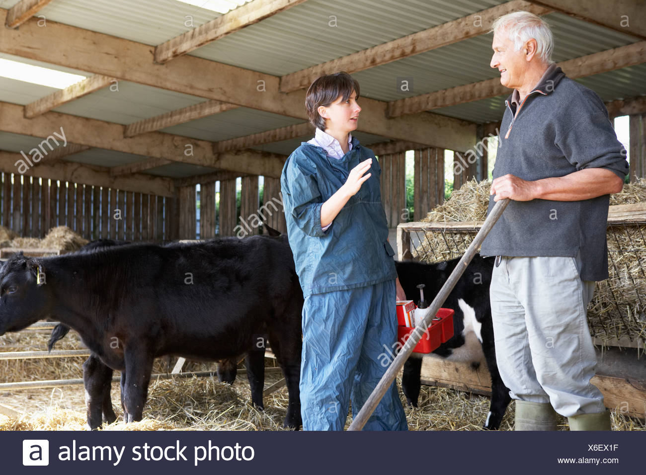 Farmer Having Discussion With Vet - Stock Image