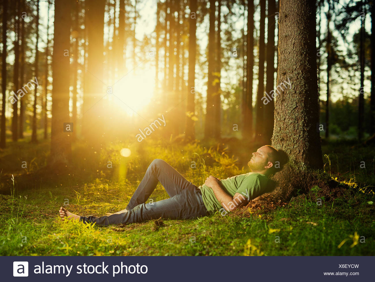 Man sleeping in spruce forest - Stock Image