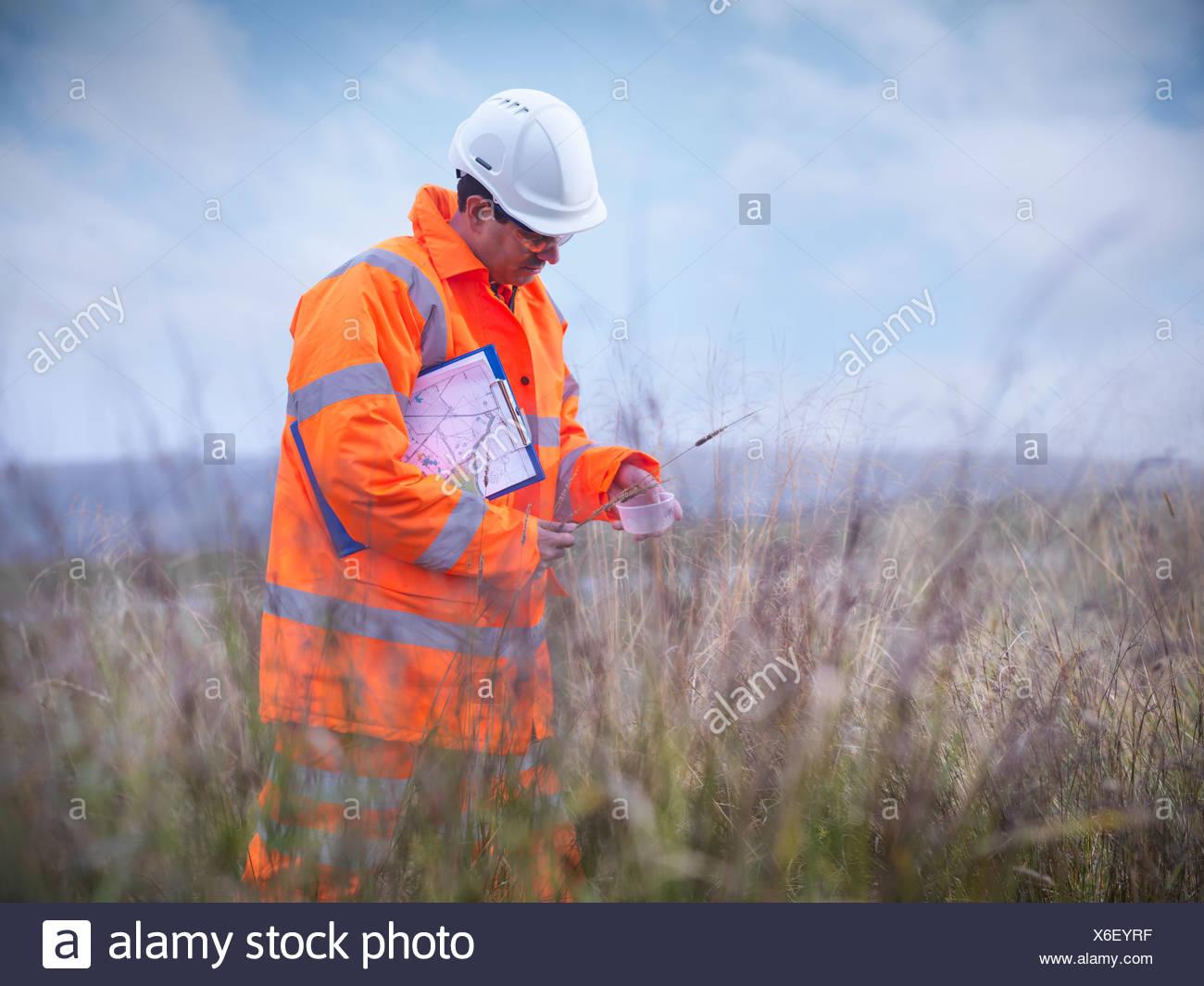 Ecologist examining tall grass - Stock Image