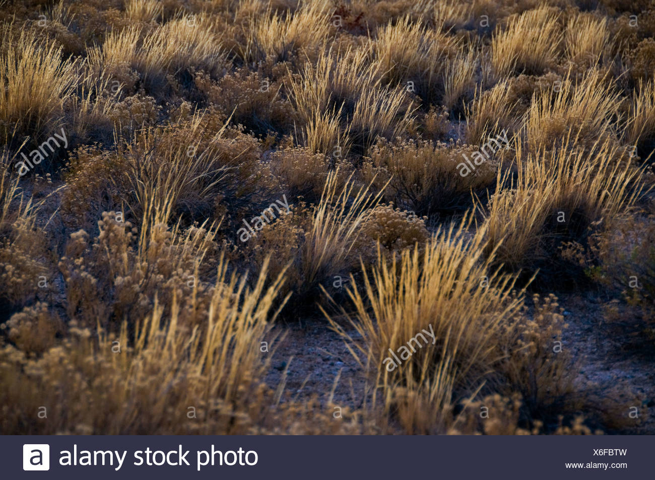 Plants on the ground of the Mojave desert, California, United States of America - Stock Image