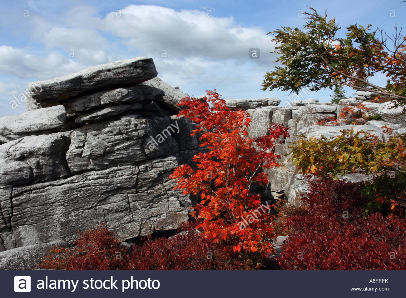 Rocks jut out from autumn foliage in the Monongahela National Forest. - Stock Image