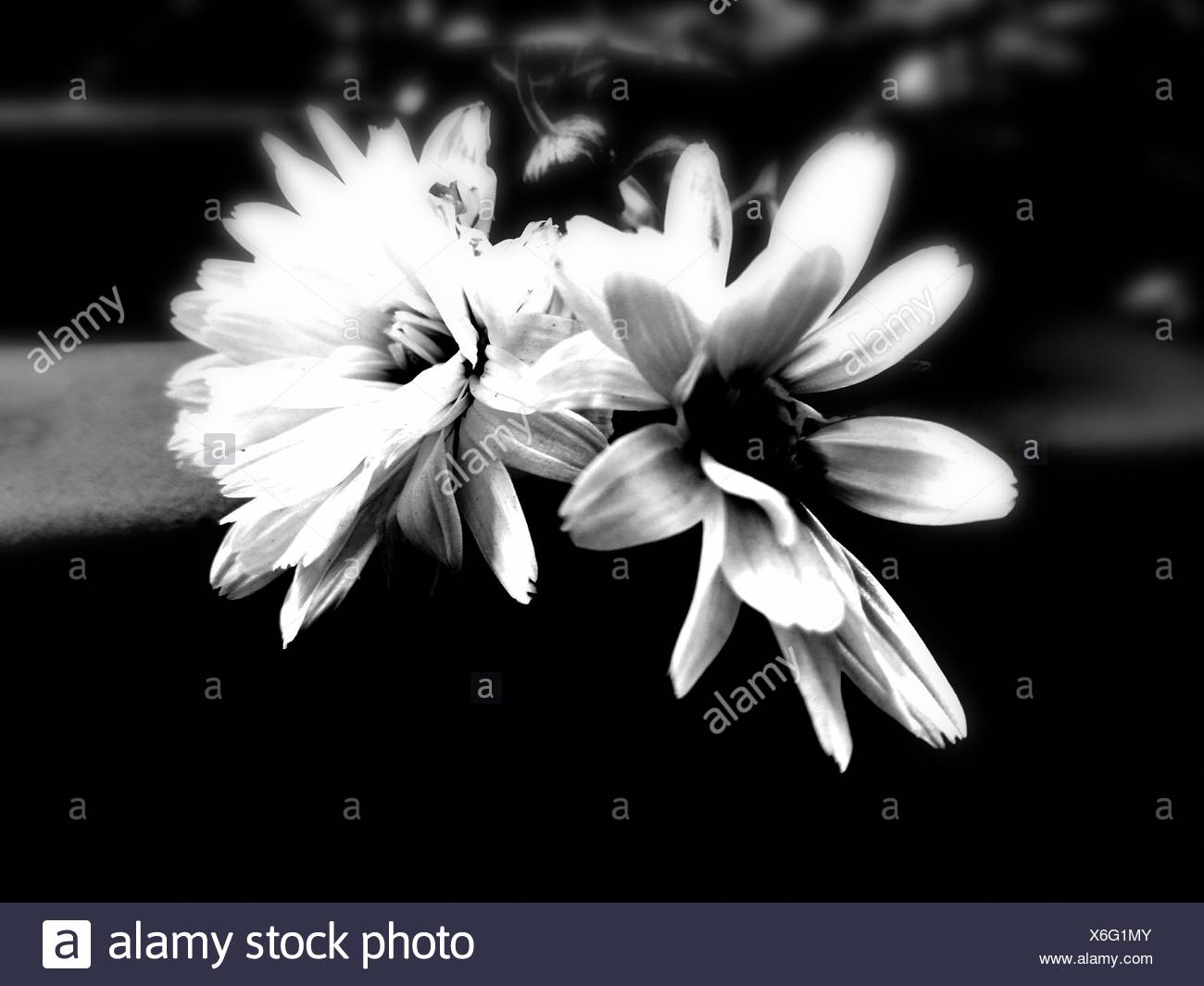 Close-Up Of Flower Against Blurred Background - Stock Image