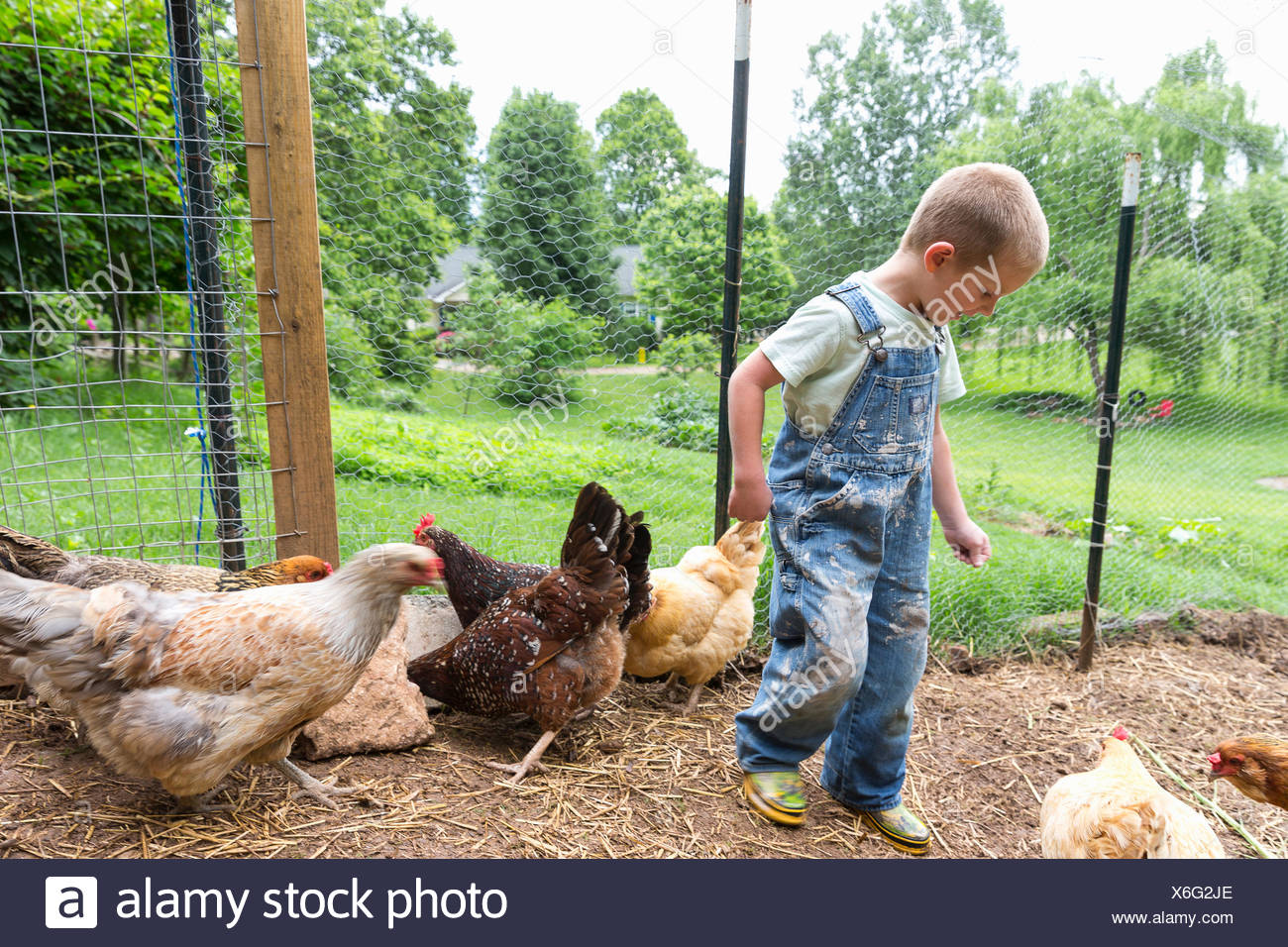 Boy in chicken coop with hens - Stock Image