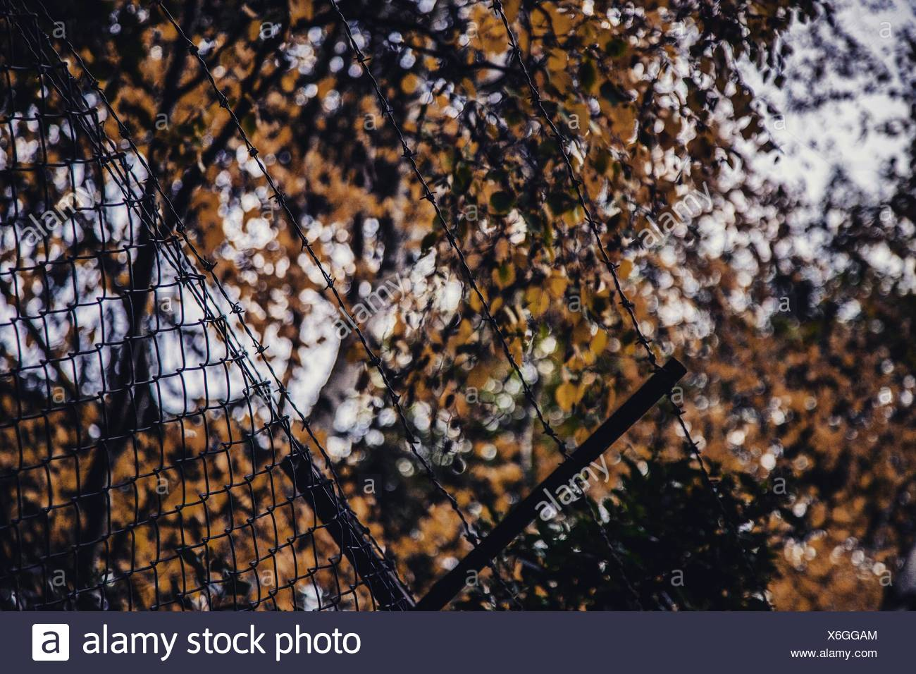 Low Angle View Of Barb Wires Against Trees - Stock Image
