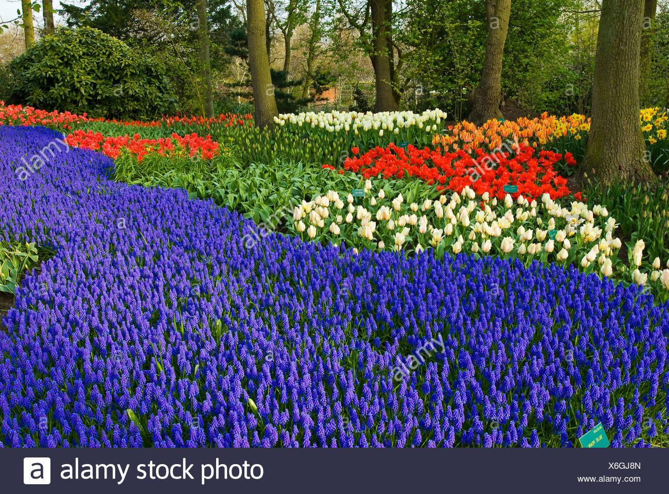 Keukenhof Gardens, Holland, the Netherlands, Europe - Stock Image