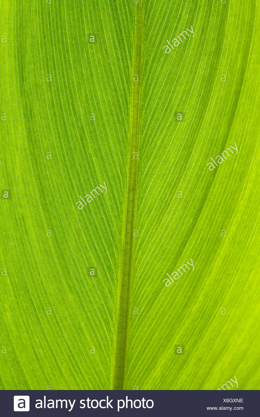 Texture Of Stem Cell Of Leaf Surface Stock Photo Alamy
