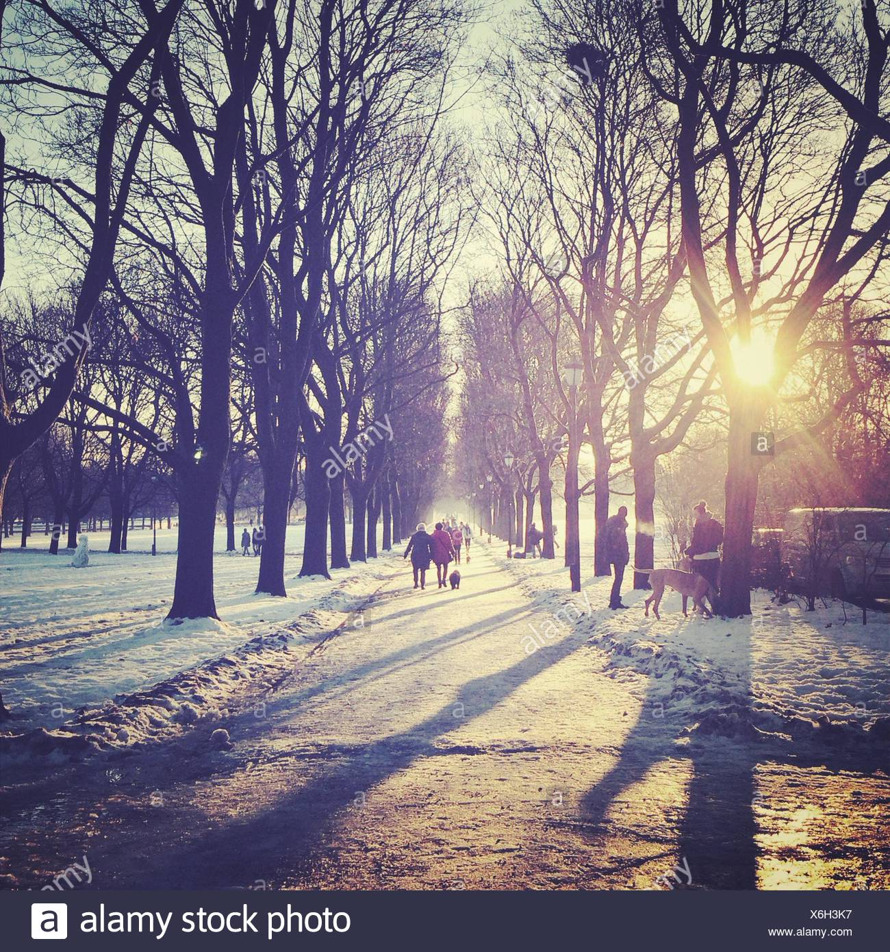 Winter in park - Stock Image