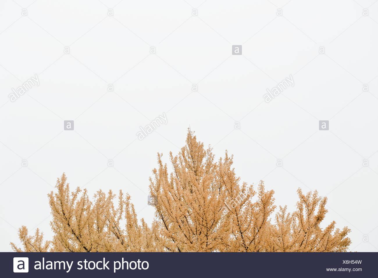 Tree top, Helsinki, Finland - Stock Image