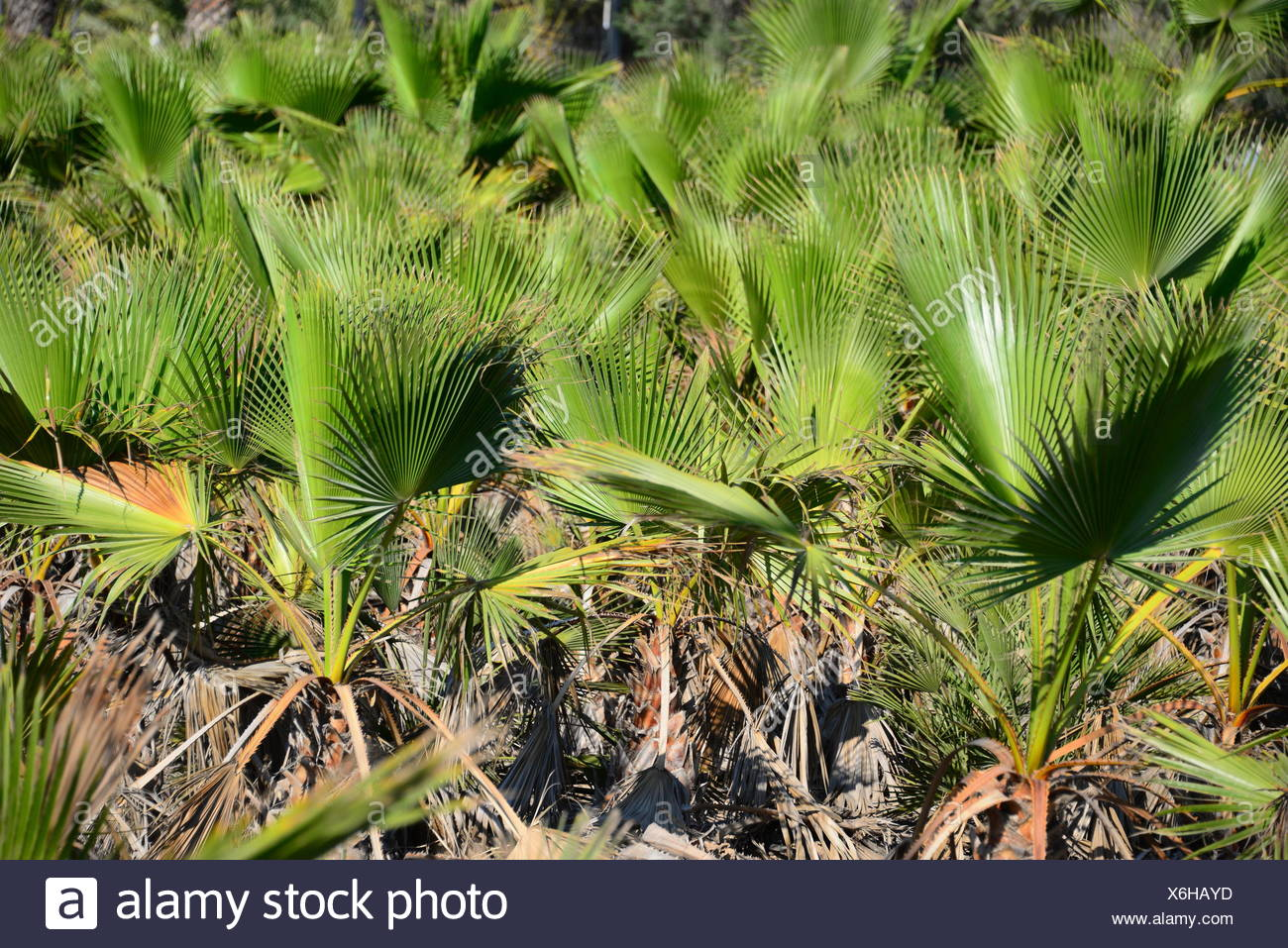 Palmenblatter Palmenblatt Stock Photo 279435617 Alamy