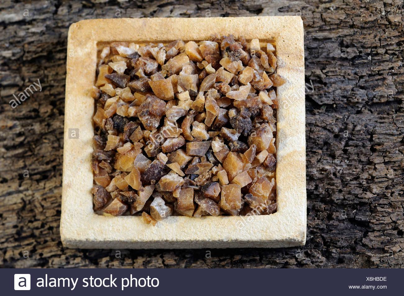 Pedate Pinallia Jackinthepulpit Rhizome - Stock Image