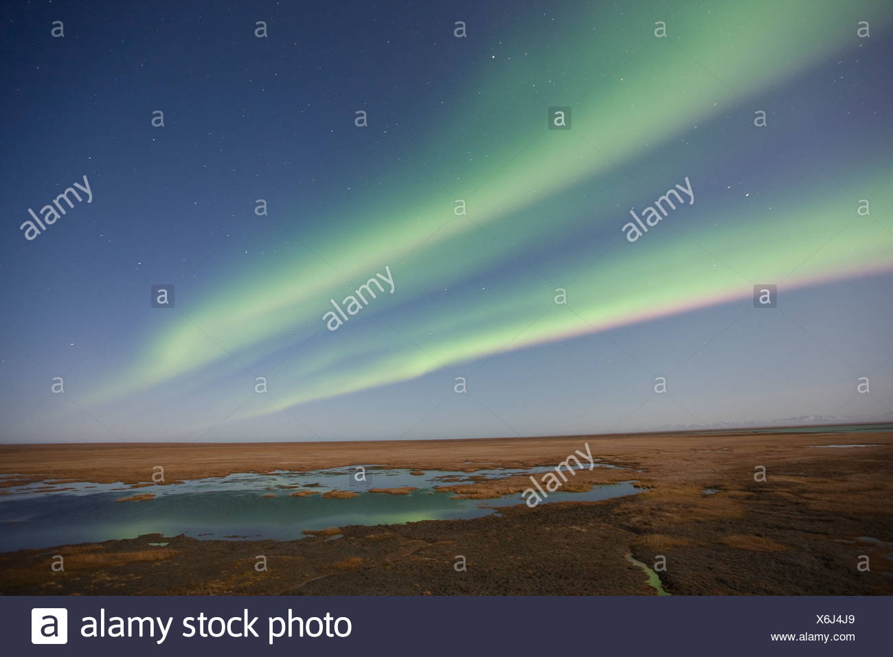 Curtains of colored northern lights (aurora borealis) dance in the night sky over the arctic tundra on the coastal plain of ANWR Stock Photo