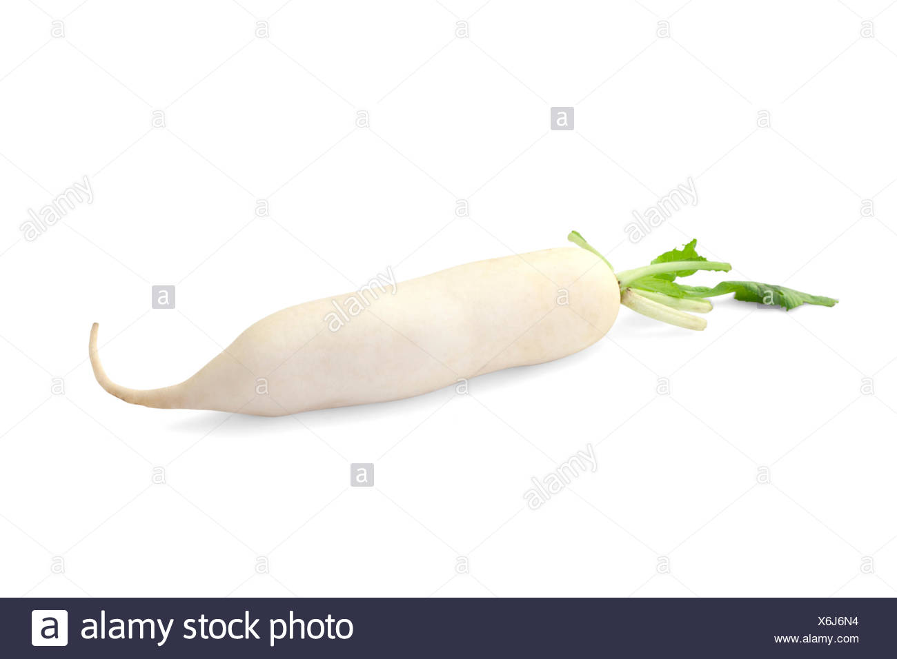 Daikon radish isolated on white background - Stock Image