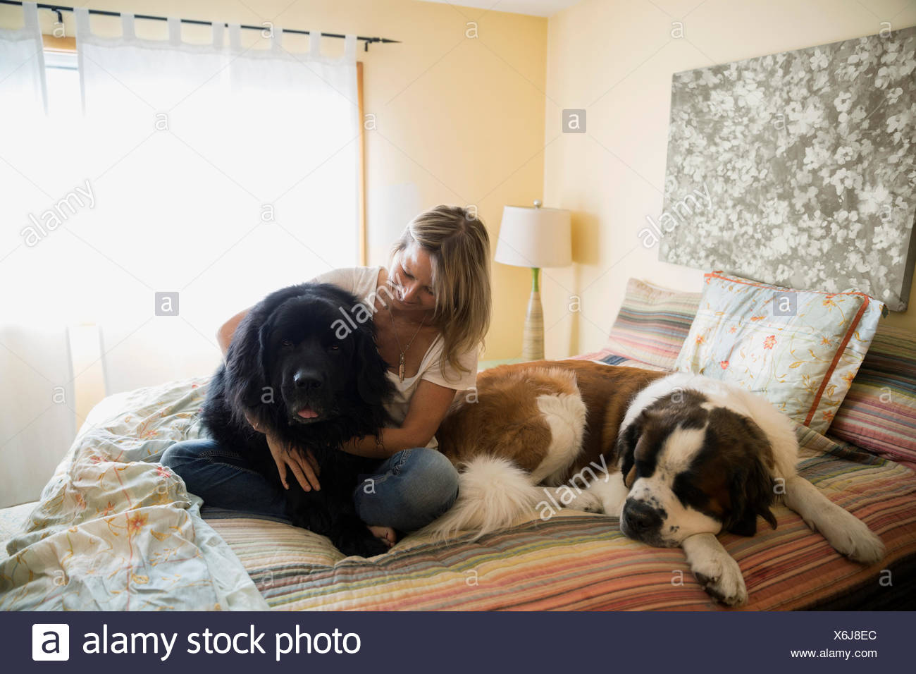 Woman cuddling big dogs in bed - Stock Image