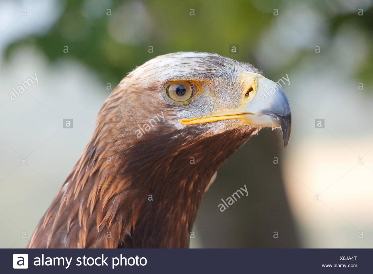 raptor latching Stock Photo