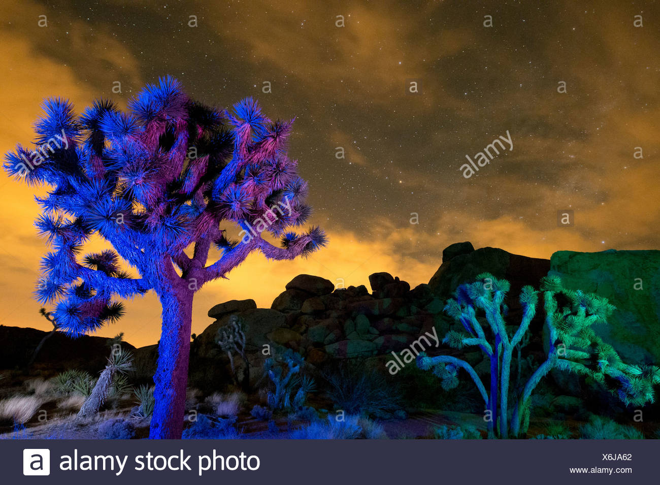 Colorful lights on Joshua Trees at night, Joshua Tree National Park, California, USA - Stock Image