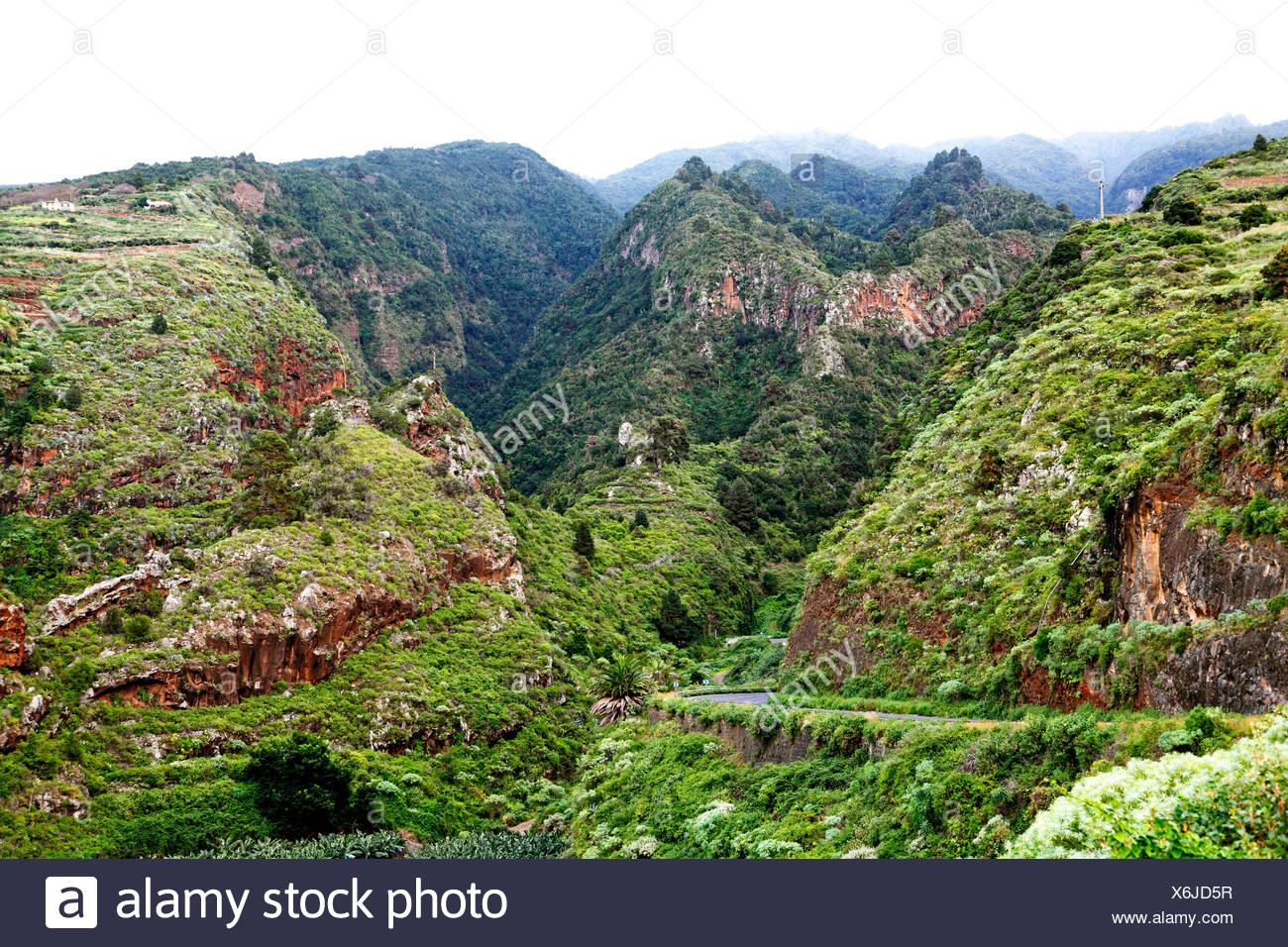 laurel forest in the mountains near La Galga, Canary Islands, La Palma Stock Photo