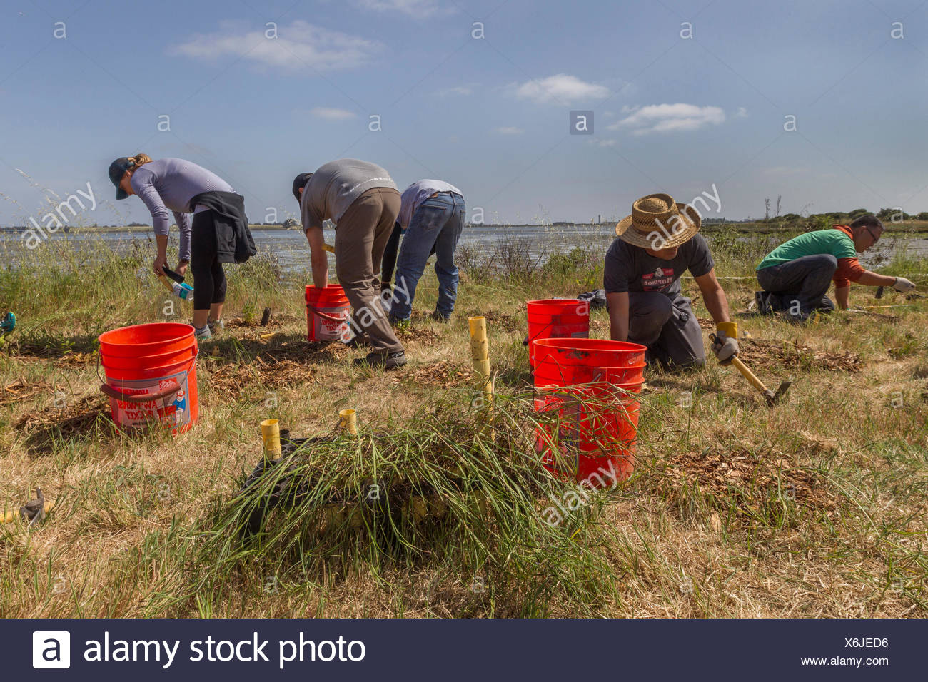 Five people working at cleanup event,MLK Shoreline,Oakland,California,USA - Stock Image
