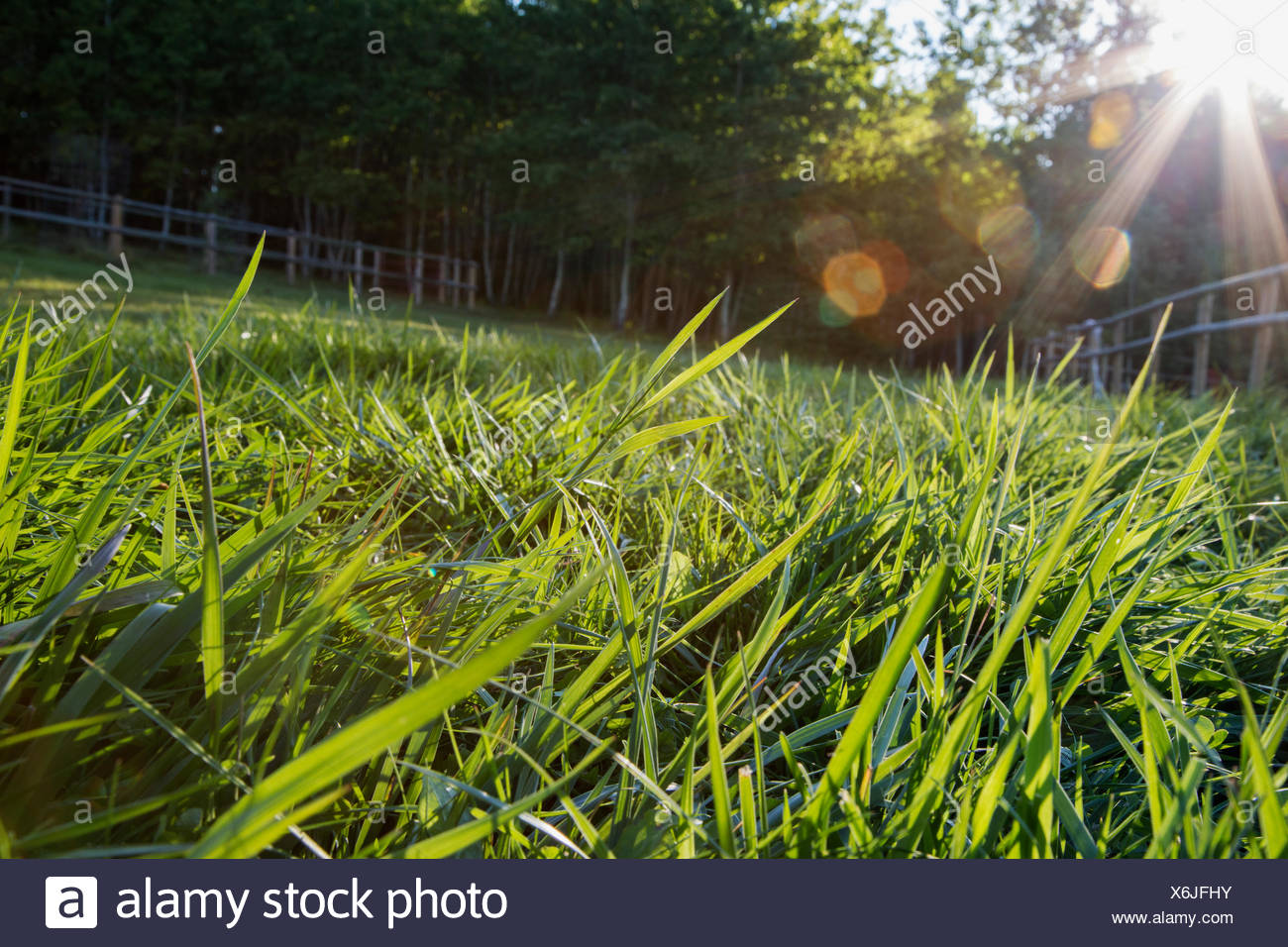 Sun shining on blades of grass - Stock Image