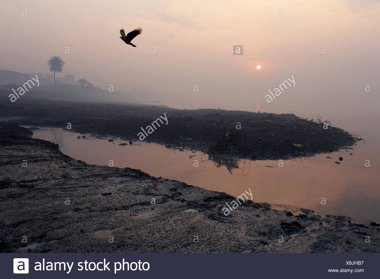 A bird flies over a polluted water channel that feeds into the Ganges River at Kanpur. - Stock Image