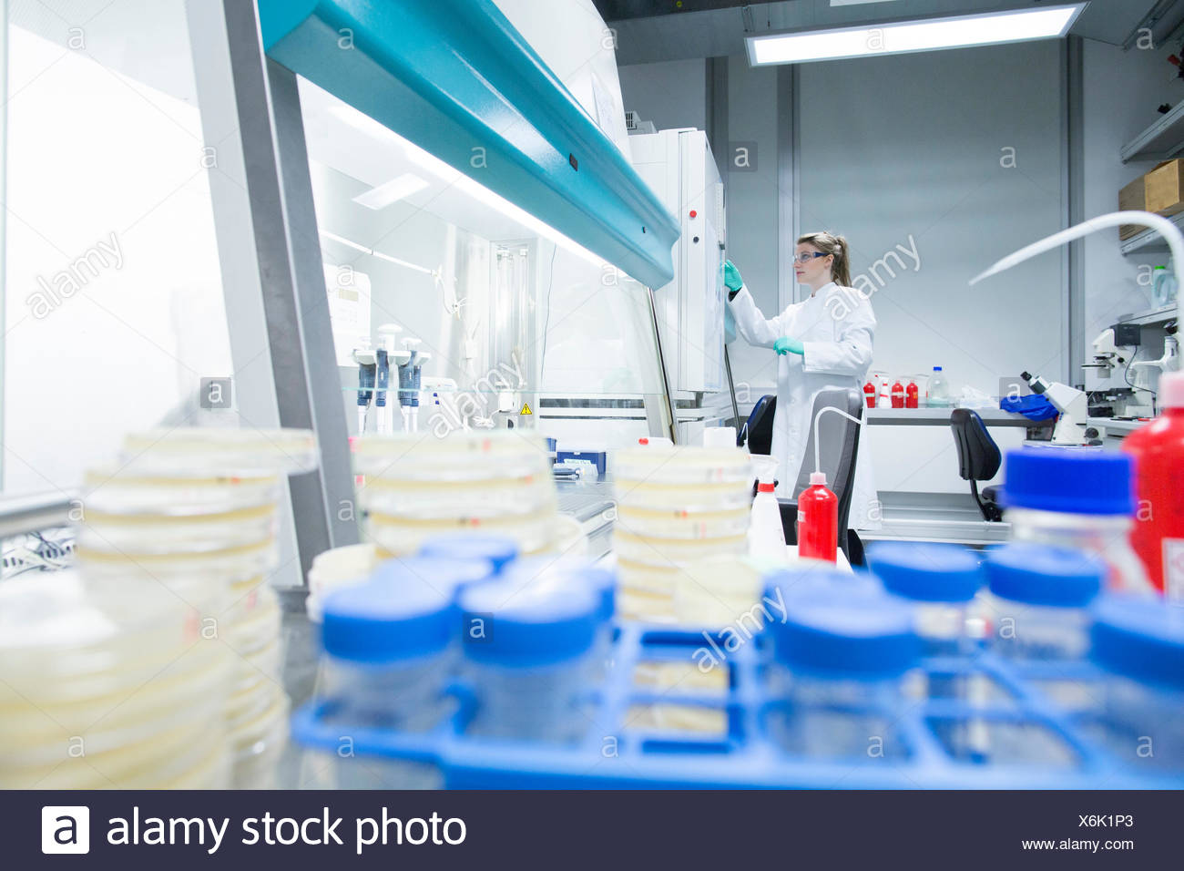 Young female scientist working at biological laboratory inspecting samples - Stock Image