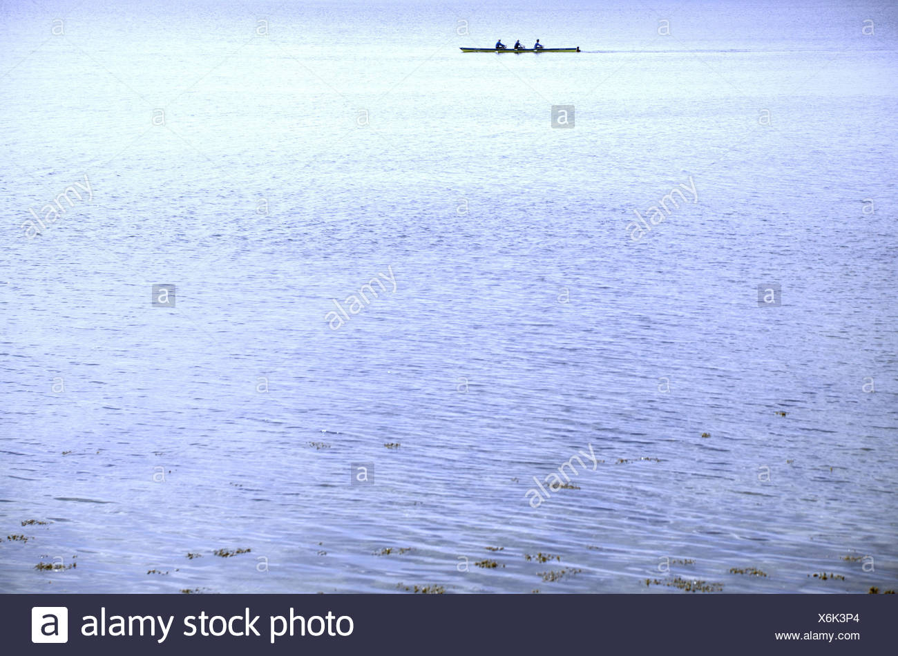 The Baltic Sea, rowing boat, outdoors, watersports, water, sea, rowing, boat, firth, Germany, Europe, Schleswig-Holstein, Flensburg, side view, water surface, - Stock Image