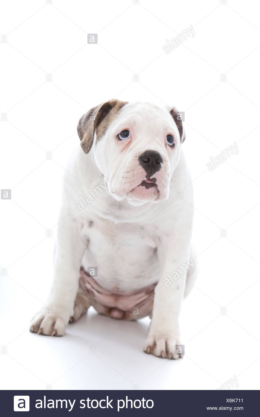 Dog with an abject expression saying sorry Stock Photo: 279476429