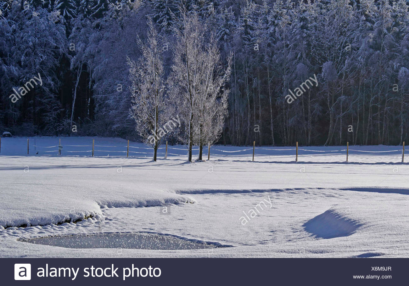 cold, ripe, ice, frost, winter landscape, snow, hoarfrost, winter landscape, Stock Photo