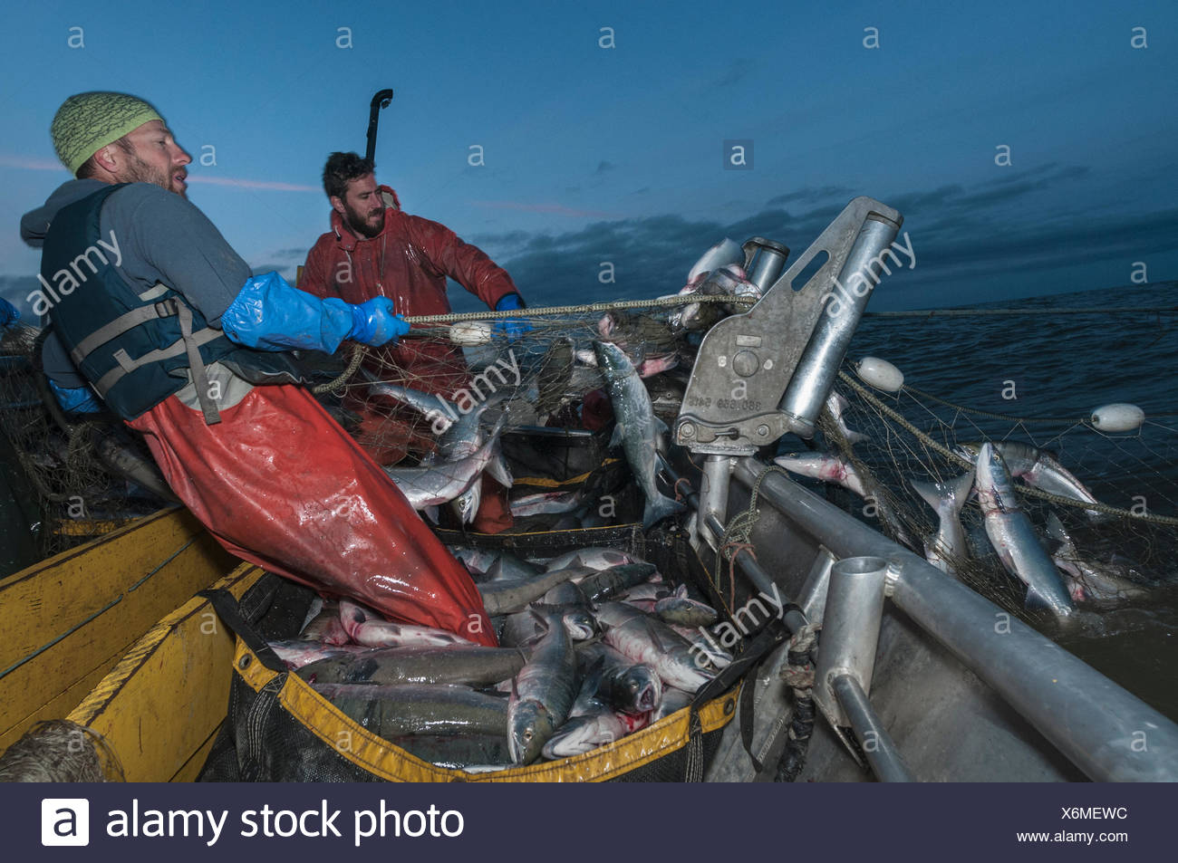 Fishermen haul in set gill net whilst fishing for Sockeye salmon (Oncorhynchus nerka) at night, Graveyard Point, Bristol Bay, Al - Stock Image