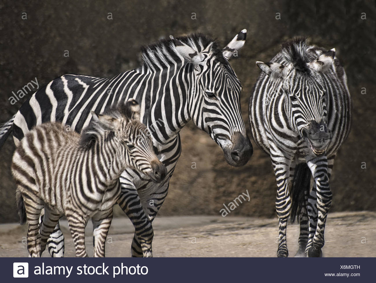 striped family - Stock Image